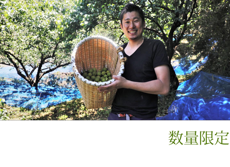 数量限定の自然栽培の生梅