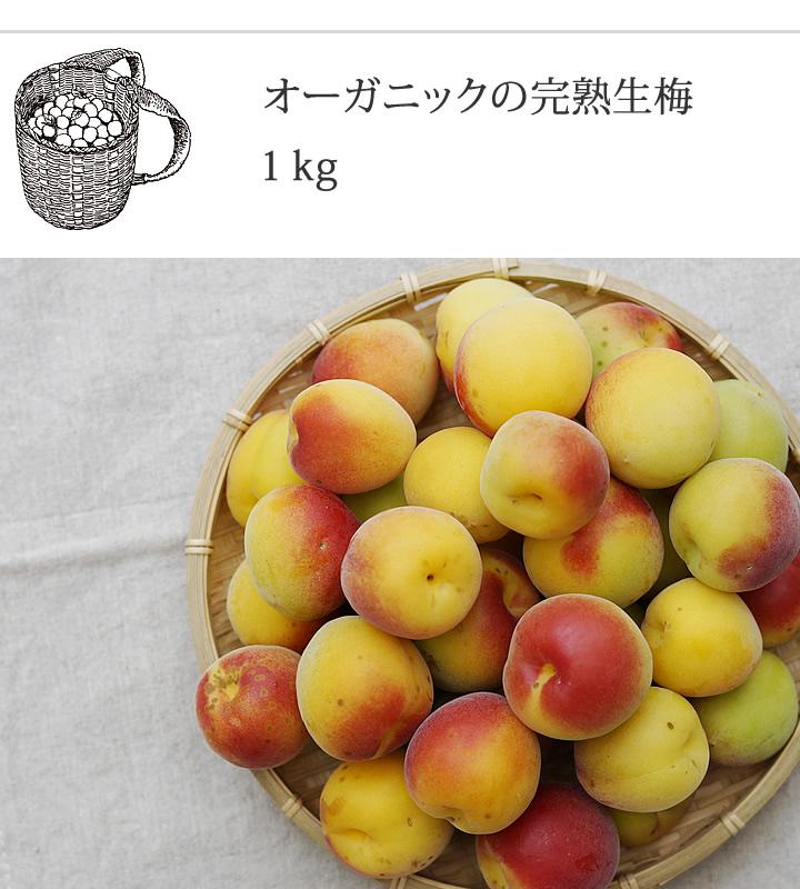 オーガニックの完熟梅